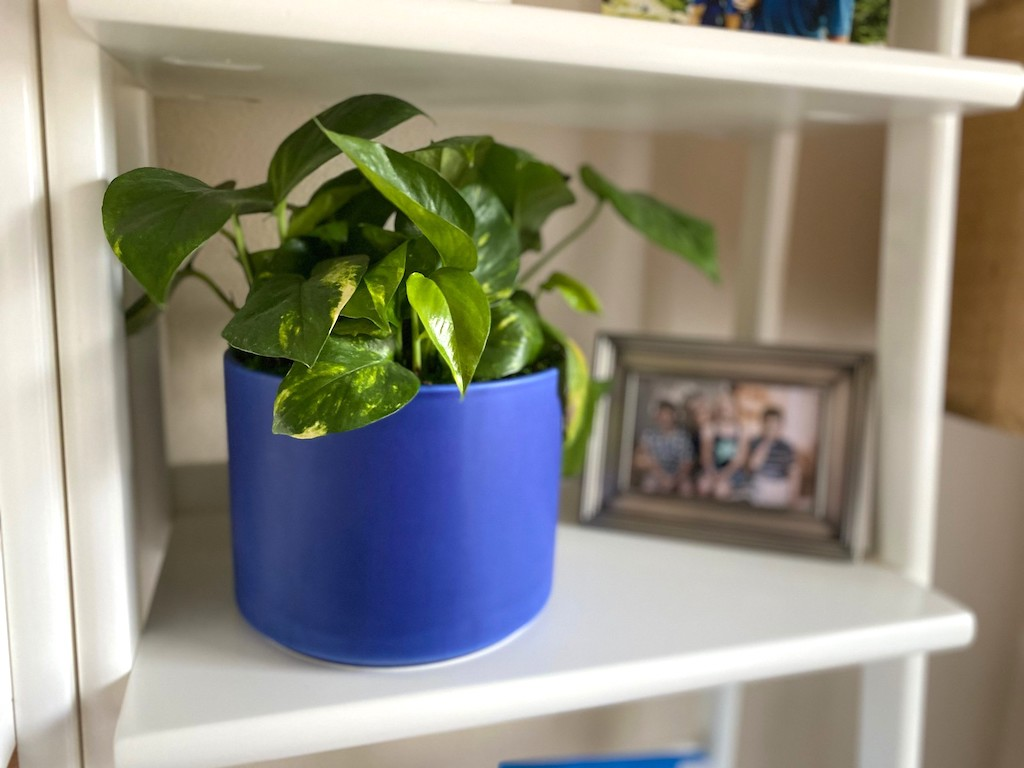 plant in blue pot with framed picture in background