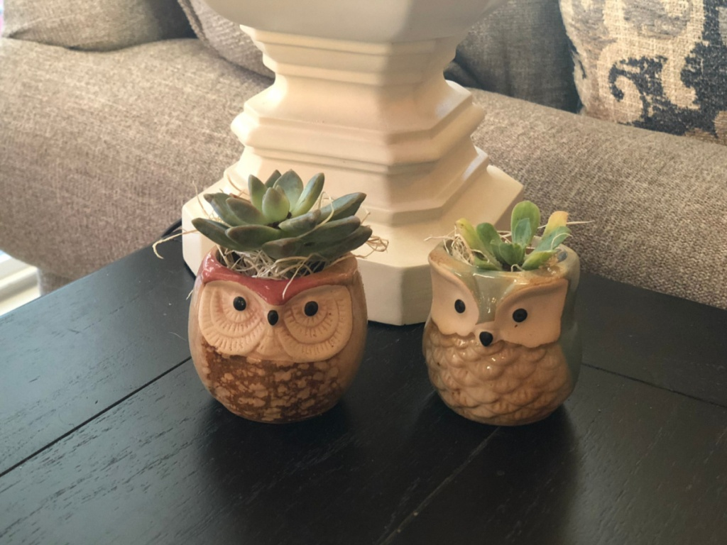 succulents in owl pots on black table with white lamp in background