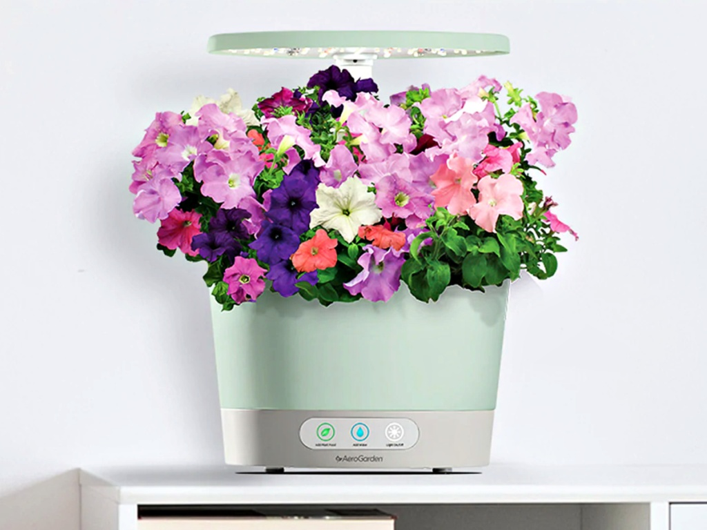AeroGarden Harvest 360 with Gourmet Herb Seed Pod Kit with flowers on shelf