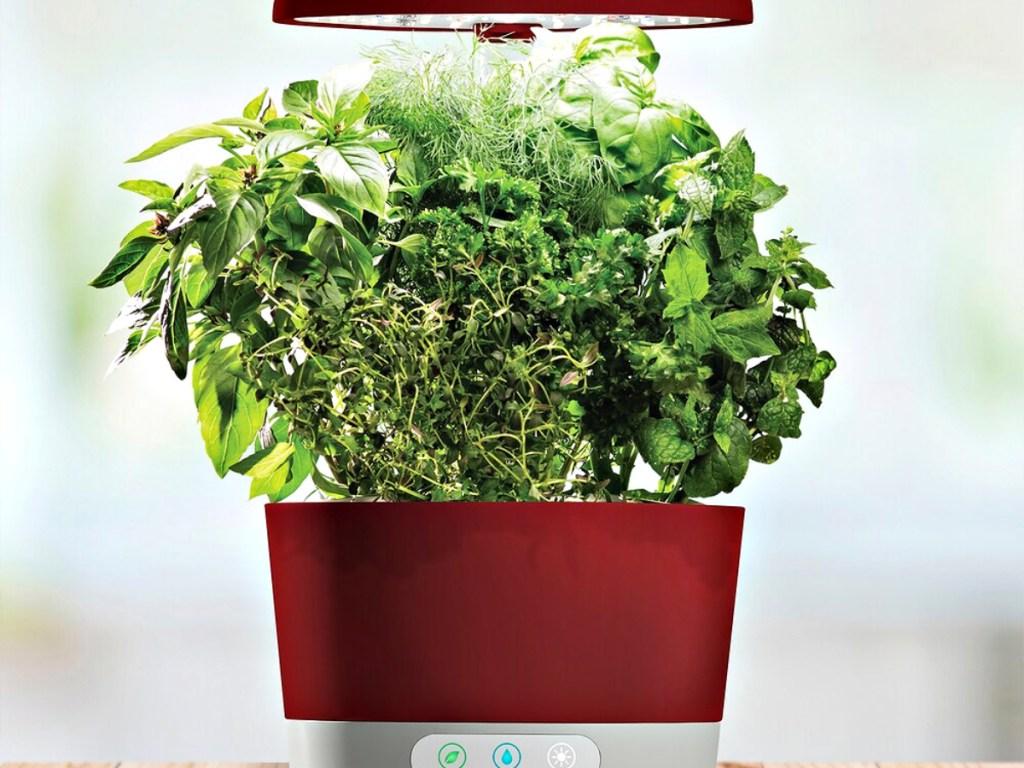 AeroGarden Harvest 360 with Gourmet Herb Seed Pod Kit