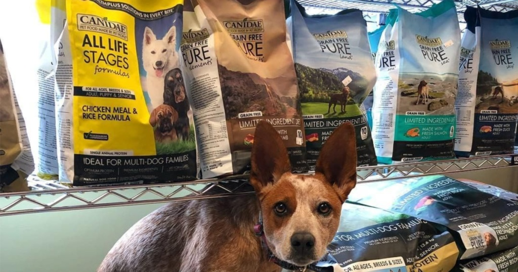 Dog surrounded by bags of dog food