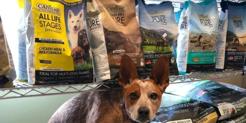 Canidae Dry Dog Food 30-Pound Bag as Low as $19 Shipped on Chewy.com (Regularly $55)