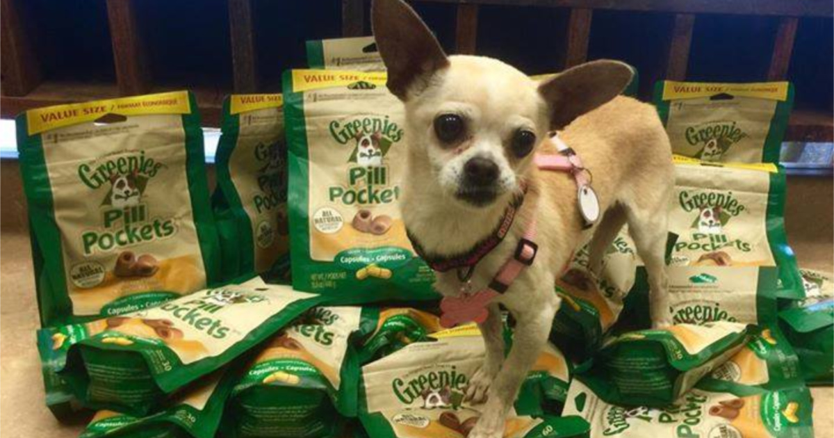 Dog standing on pile of bags of treats