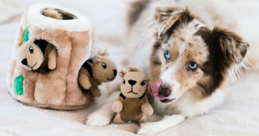 Australian shepard playing with a squirrel plush dog toy