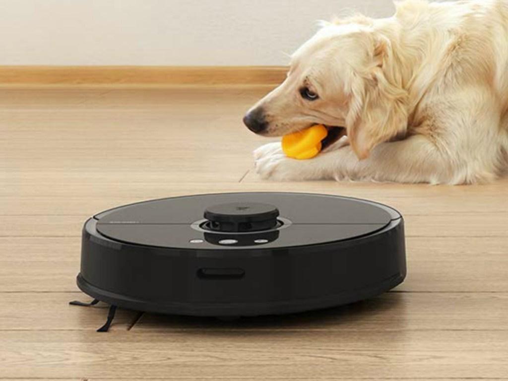 Black robotic vacuum on hardwood floor near Golden Retriever