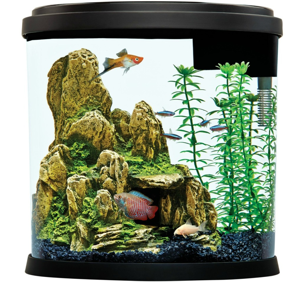 Top Fin 3.5 Gallon Aquarium shown with fish inside