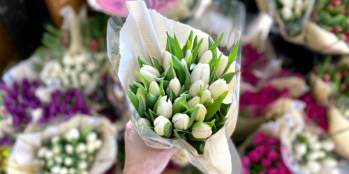 TWO Dozen Tulips Only $10.99 at Trader Joe's
