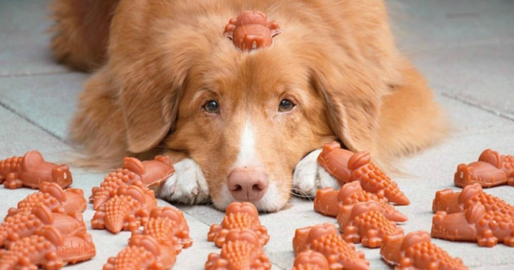 brown dog surrounded by dog treats