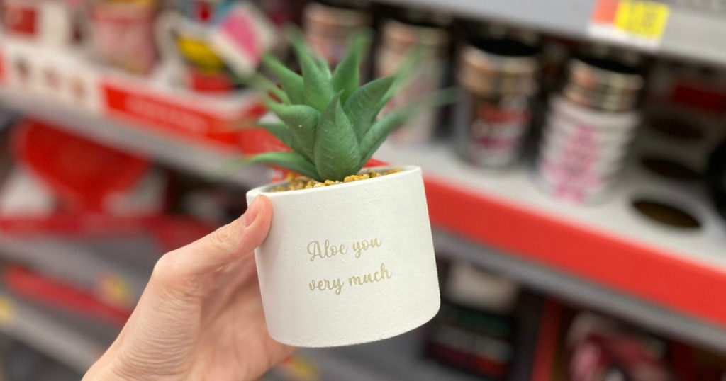 woman holding Way to Celebrate 'Aloe You Very Much' Faux Succulent