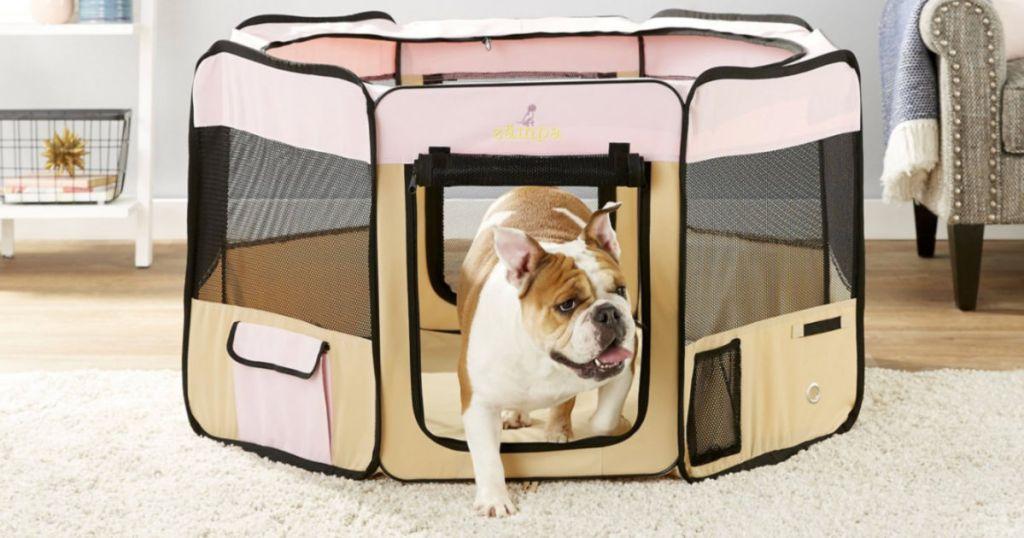 pink Zampa Pet Folding Playpen with english bulldog walking out
