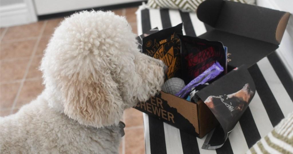 dog sitting by Super Chewer Barkbox