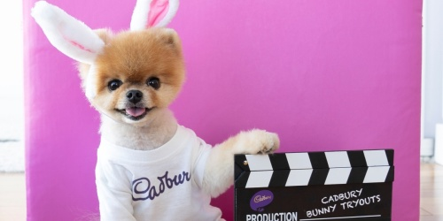 Your Pet Could Be the Next Cadbury Bunny and Win $5000 | Enter Now!