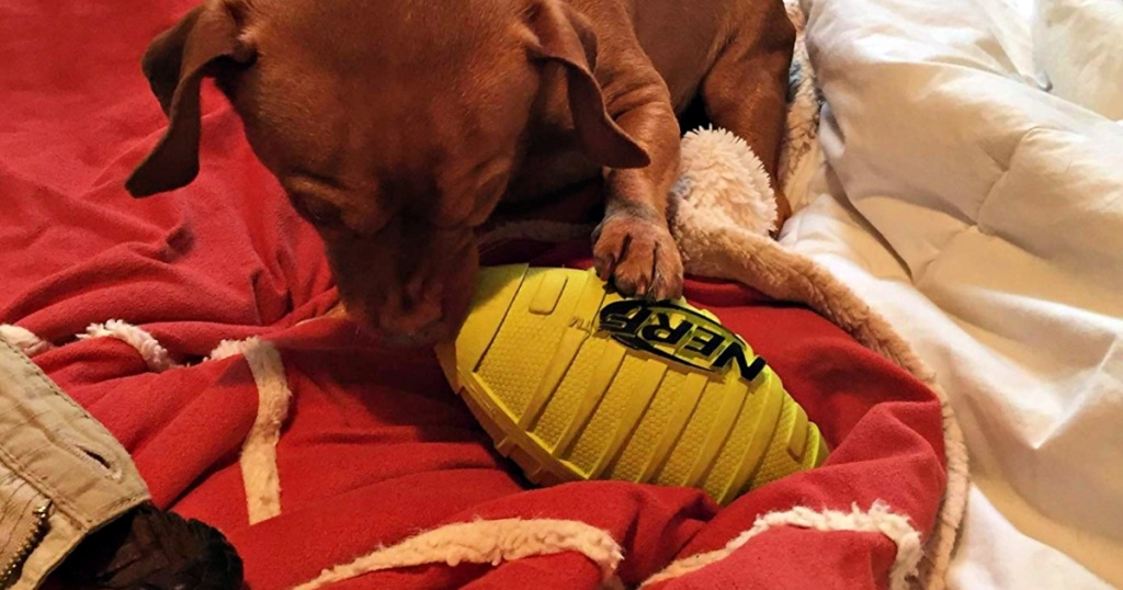 dog playing with Nerf Dog Squeak Rubber Football Dog Toy