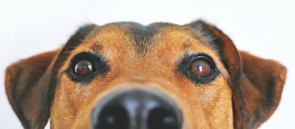 dog peering over to look at you