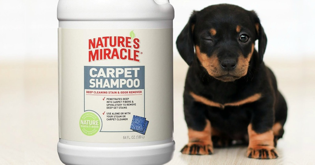 puppy next to jug of shampoo cleaner