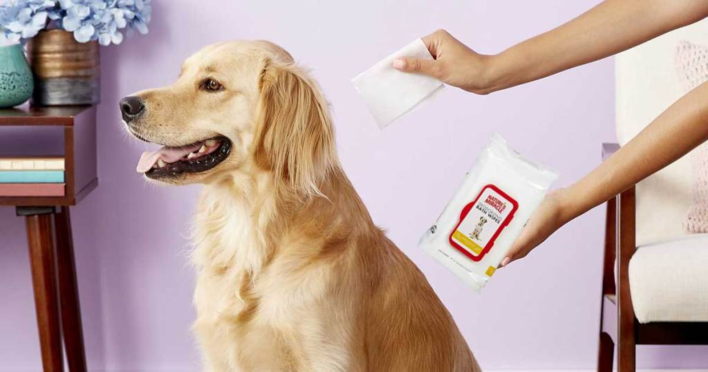 woman's hand using pet wipe to clean dog