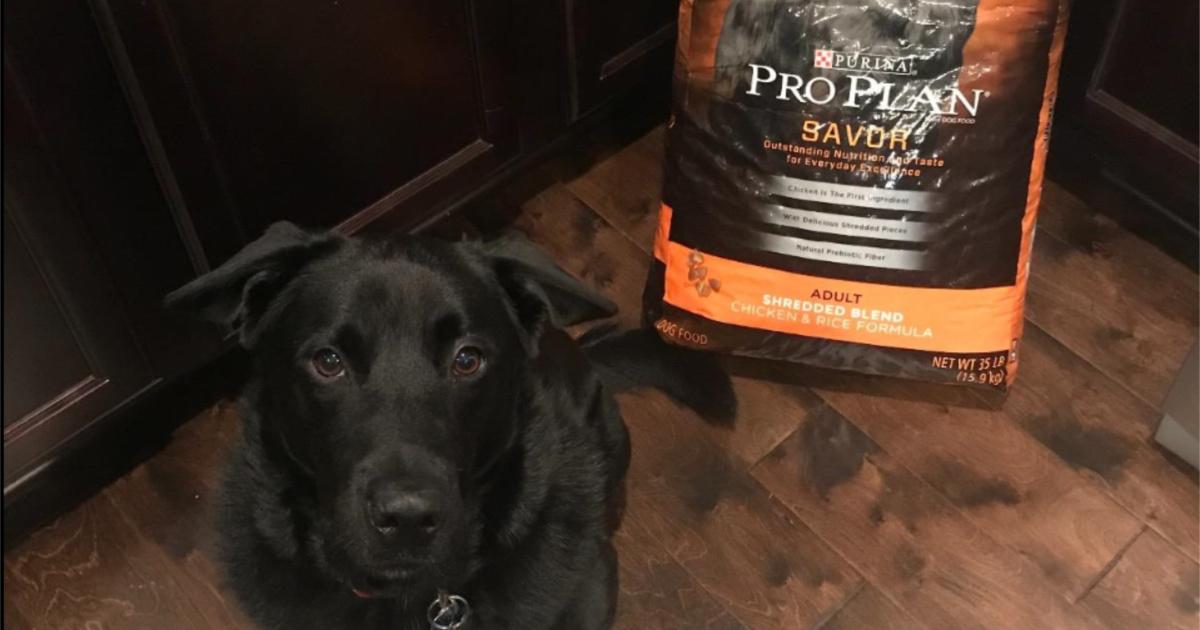 pro plan savor bag with black dog in front of bag