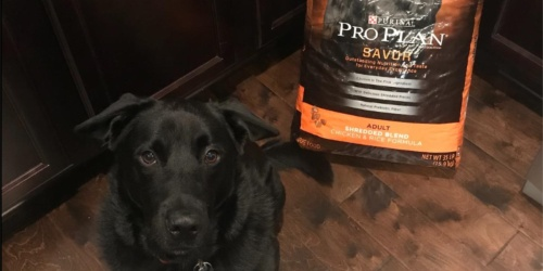 Purina Pro Plan Dog Food 47-Pound Bag Only $34 Shipped or Lower on Amazon
