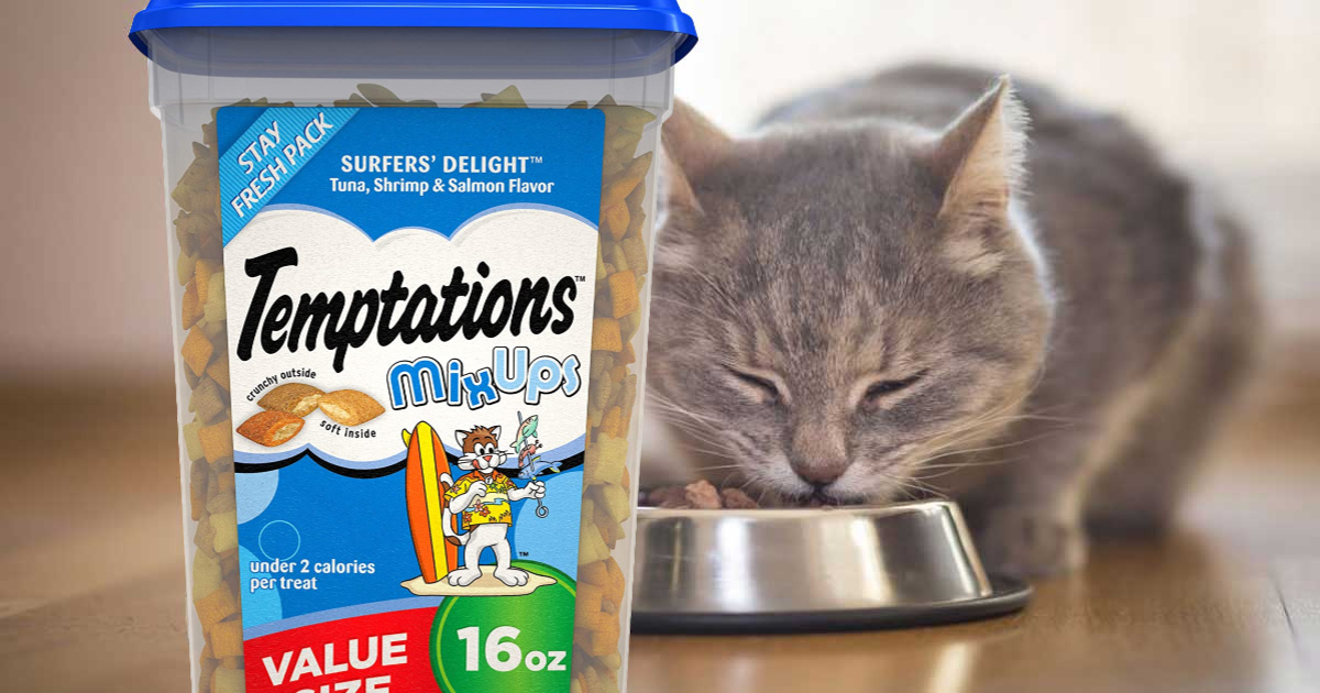 cat in background eating with box of temptations surfer favorite