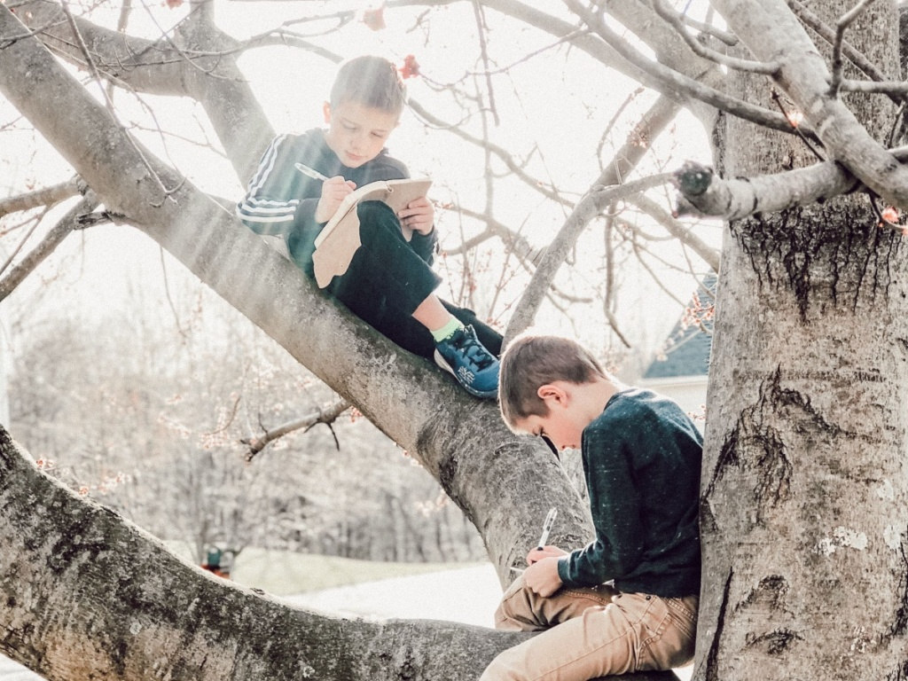 Boys doing homework in tree