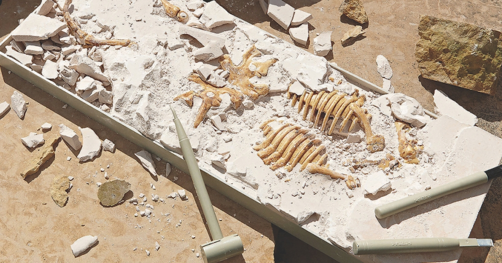 bones in clay science kit for kids with dig up tools
