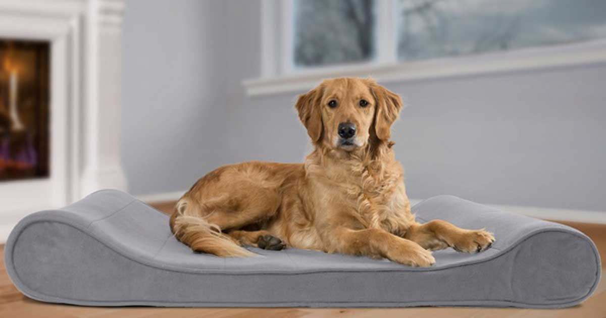 cutest dog ever in a dog bed