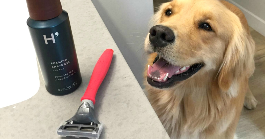 harry's razor on counter with dog
