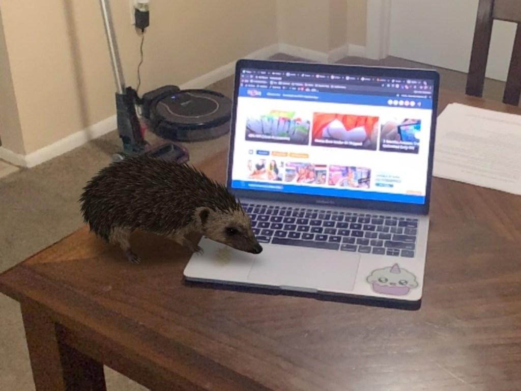 hedgehog on laptop
