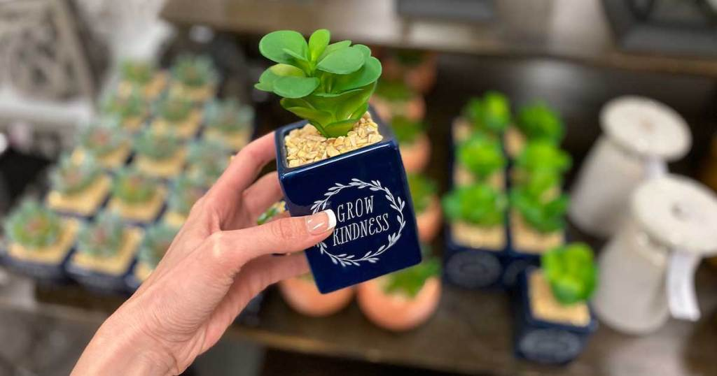 hand holding a grow kindness succulent