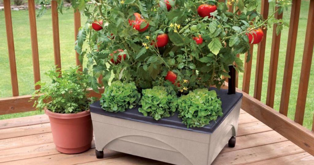 Sandstone colored City Pickers Patio Raised Garden Bed Grow Box Kit with tomato bush planted on deck