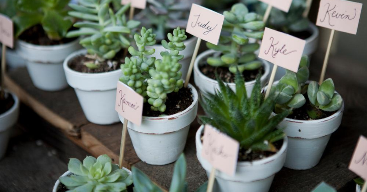 Costa Farms 2 in. Mini Unique Succulents with white painted pots and guest names on signs