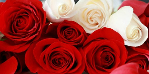 Fresh Roses 50-Count Only $39.99 Shipped on Costco.com | 17 Color Choices