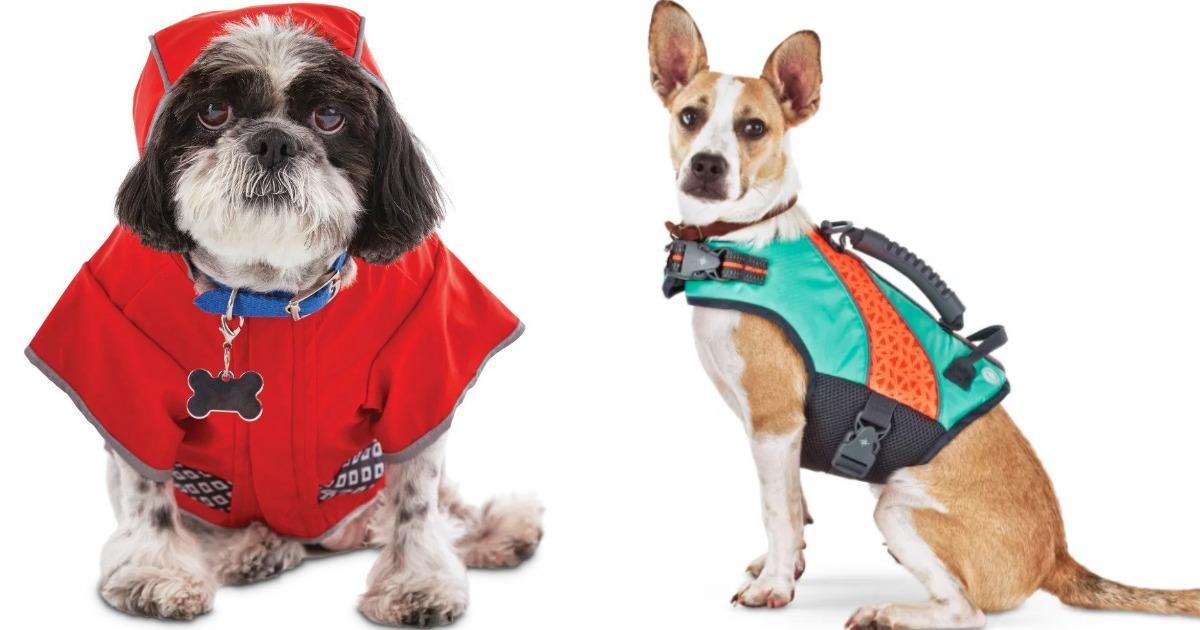 dogs wearing jackets