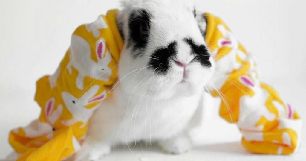bunny with bunny print socks on its ears
