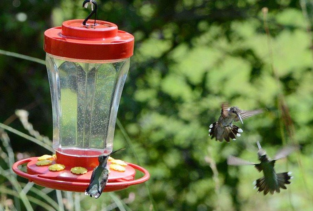 red hummingbird feeder with hummingbird on it and two flying in air near it