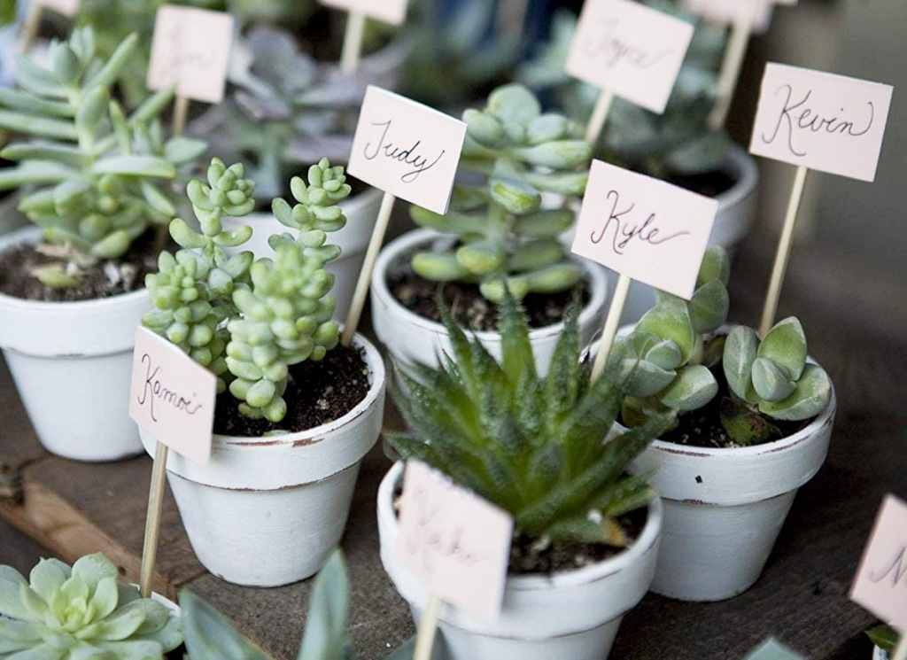 mini succulents in pots with name cards sticking out of them