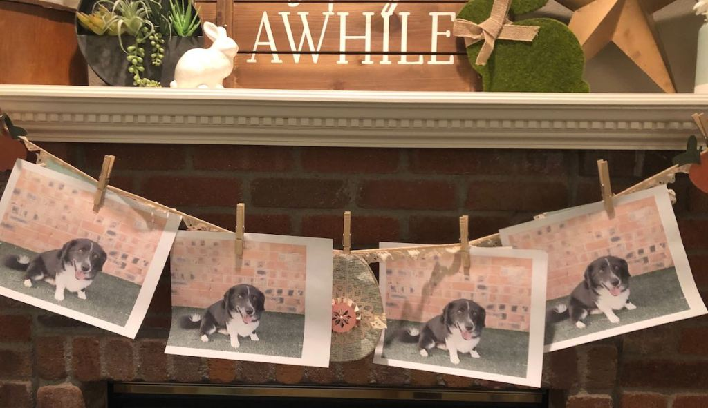 pictures of same dog hanging from string on fireplace mantel