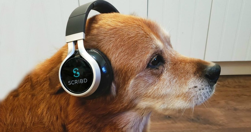 red dog with a pair of headphones on