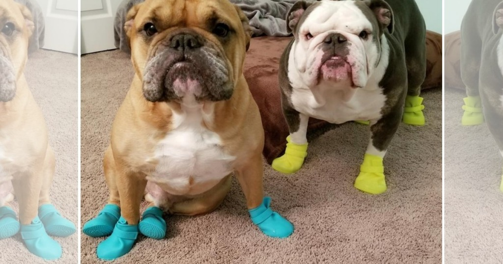 dogs wearing boots