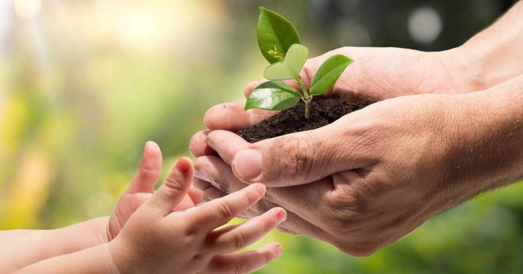 parents hand holding a plant seedling to a young child's hands