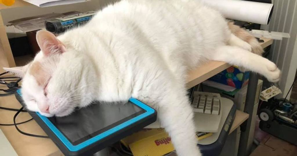 cat sleeping on ipad with blue cover
