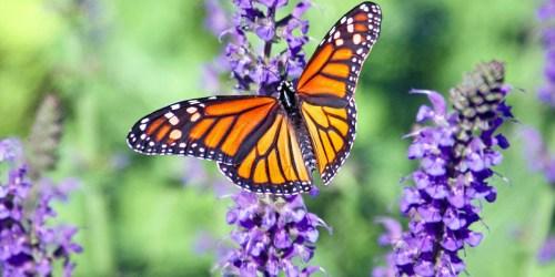 FREE Butterfly Garden Starter Seed Kit