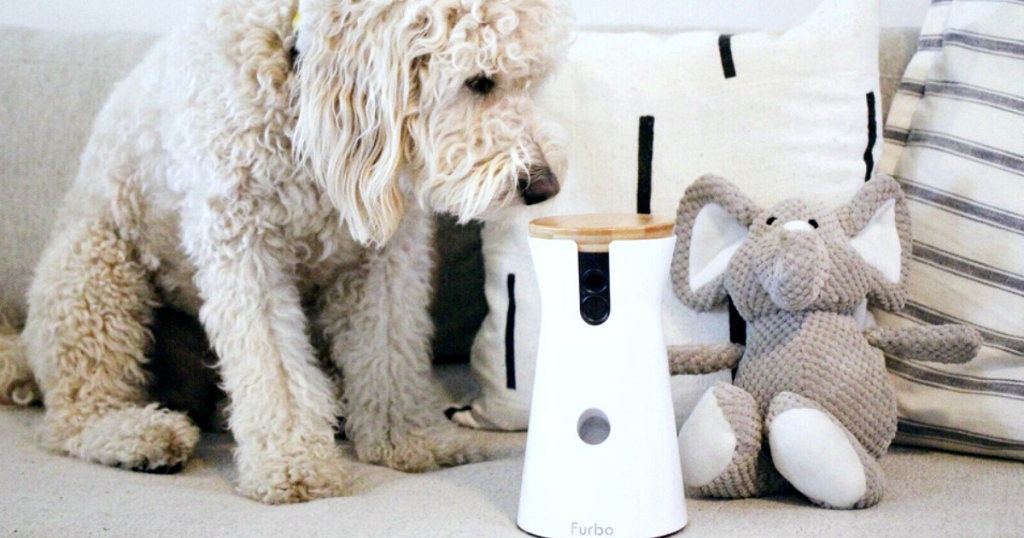 white dog sniffing furbo dog camera