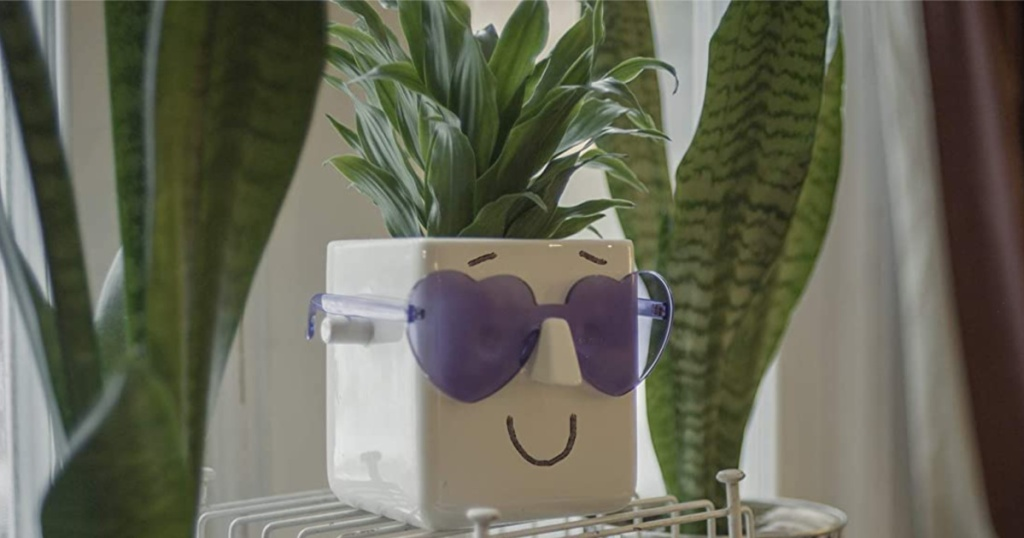white smiling face plant put with purple heart shaped sunglasses