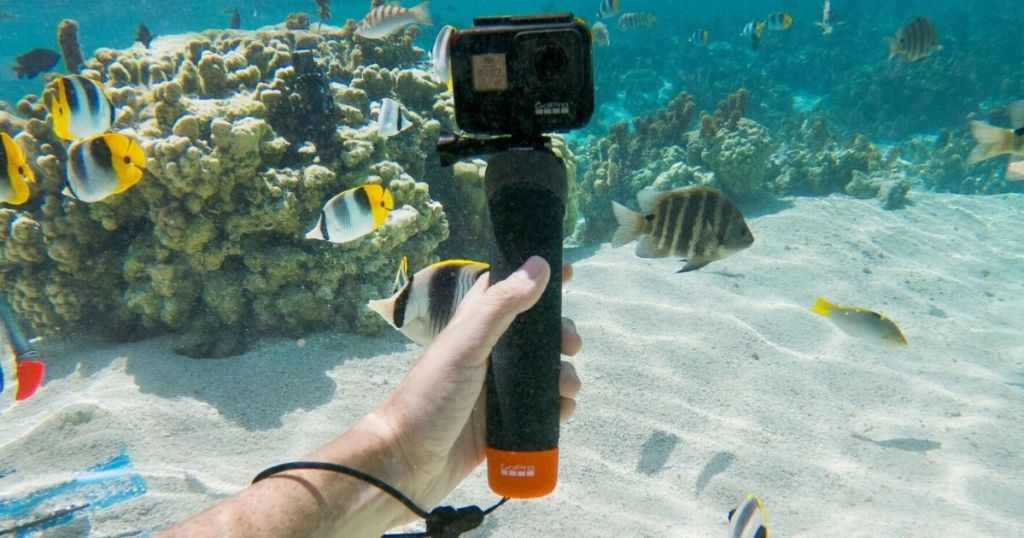 GoPro camera being used underwater to capture images of aquatic life