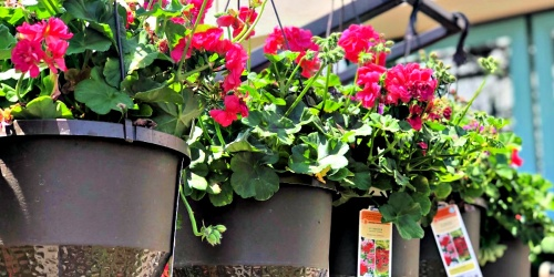 30% Off Hanging Baskets at Lowe's | Easy Mother's Day Gift