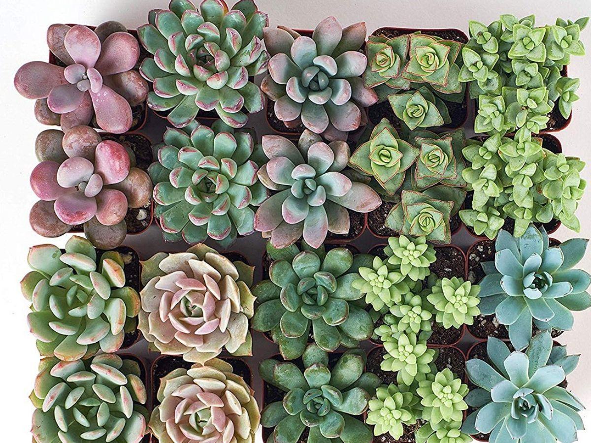 20 succulent plants