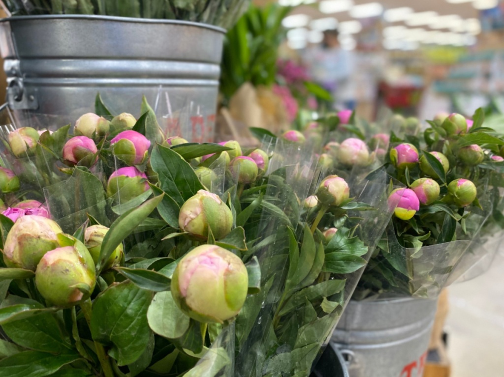 Peony bouquets in silver buckets at Trader Joe's