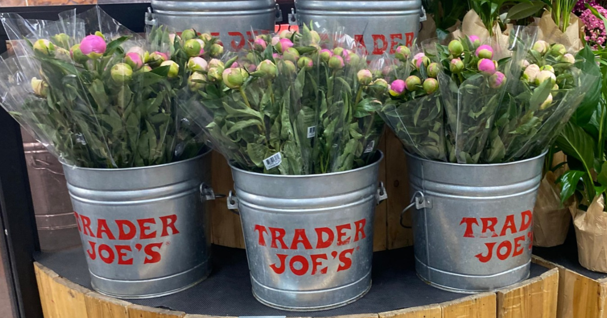 3 Trader Joe's buckets filled with peony bouquets