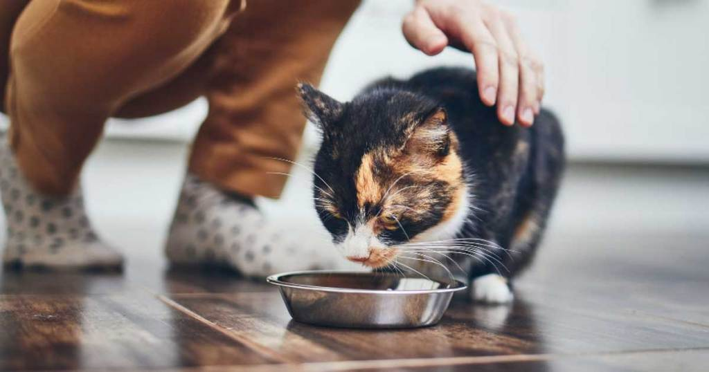 cat laying in front of dish of cat food